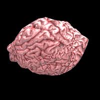 Rust Fresh Brain Skins