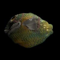 Fish Rock Rust Skin